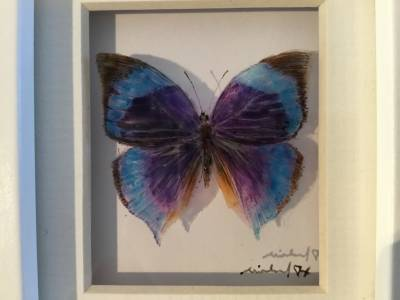 Purple and Blue Butterfly 21-7-01