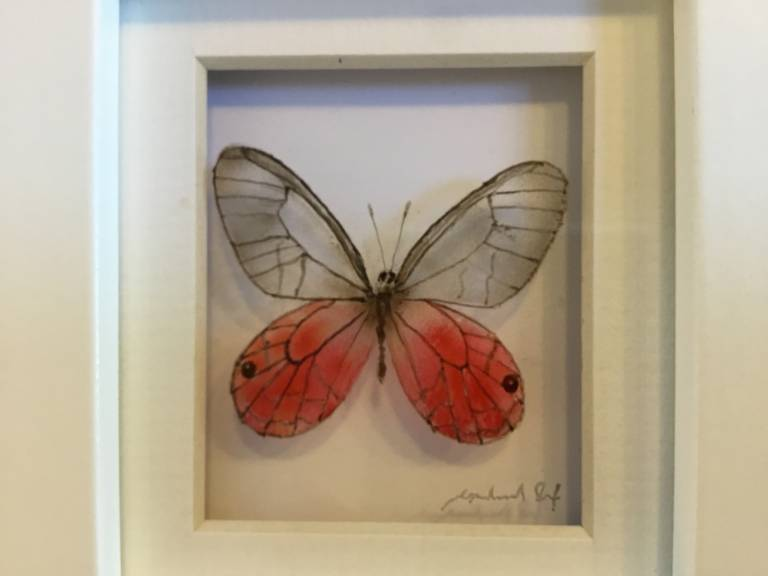 Michael Dix - Pink opaque butterfly 21-7-10