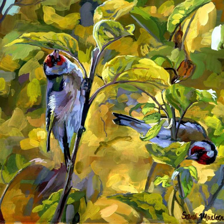 Sonas  Maclean - Autumn Joy