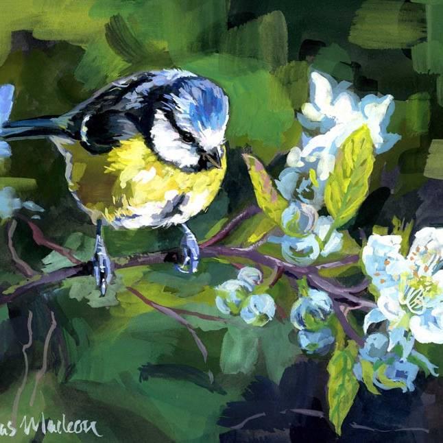 Sonas  Maclean - Bluey Green