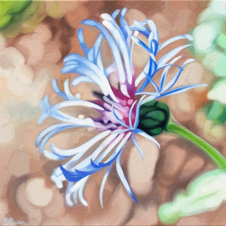 Lynsey Ewan - Mountain Bluet 2