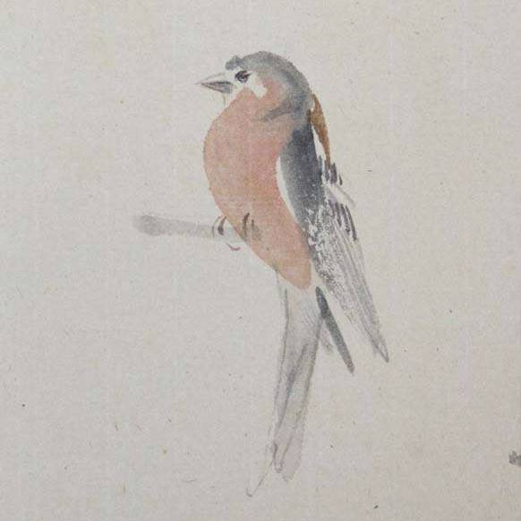 Claire Harkess RSW - Chaffinch