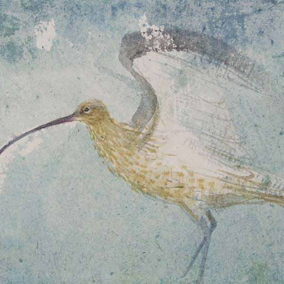 Claire Harkess RSW - Curlew