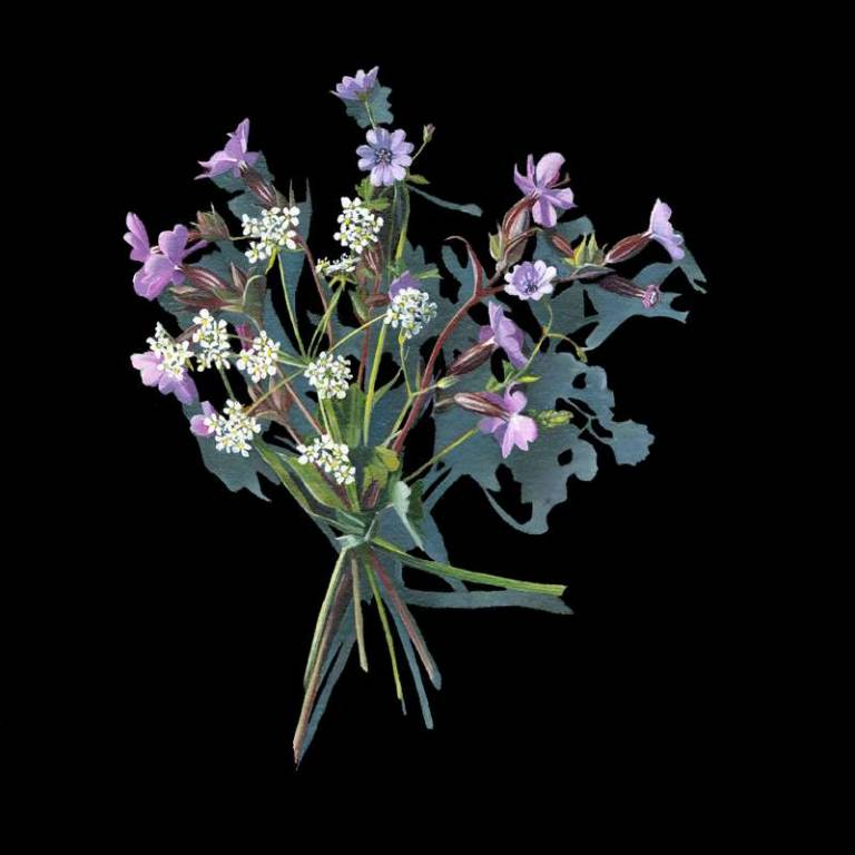 Kirsty Lorenz - Votive Offering No. 89 Herb Robert after Mary Delany