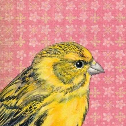 Stanley Bird - Scotch Canary