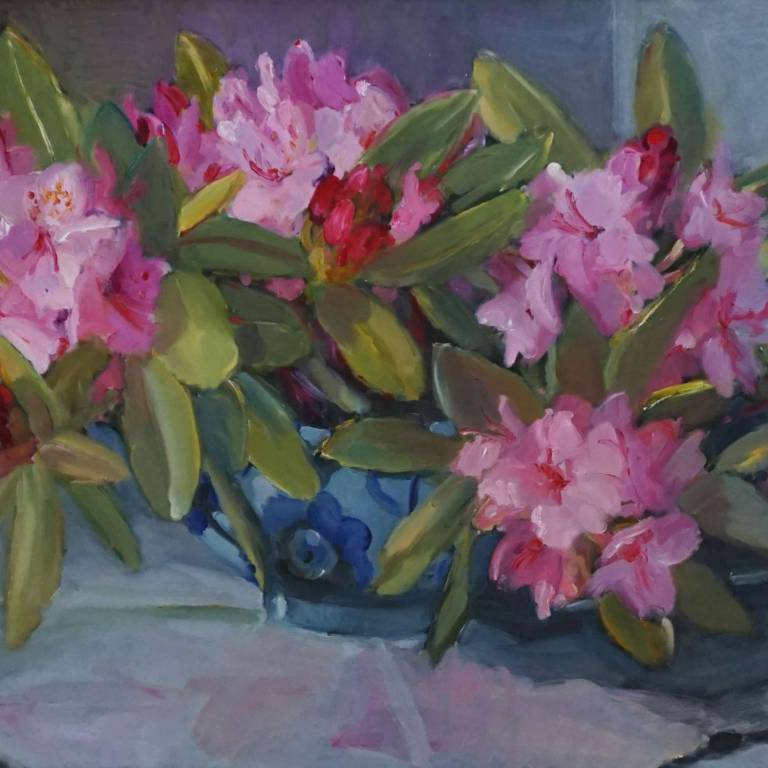 Pink Rhododendrons From My Garden