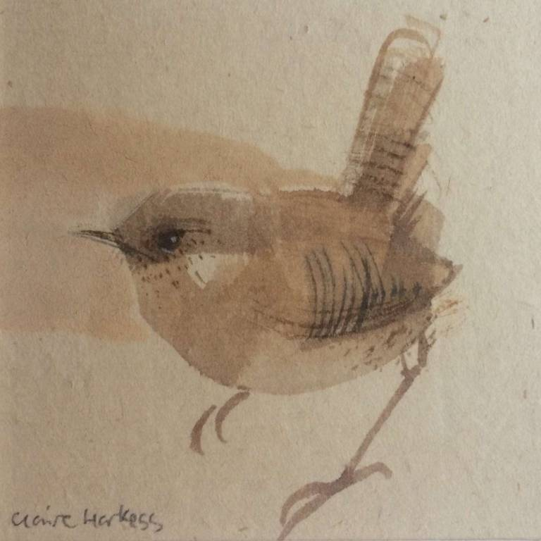 Claire Harkess RSW - Wee Wren