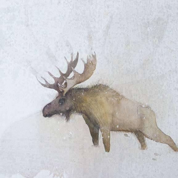 Claire Harkess RSW - Moose