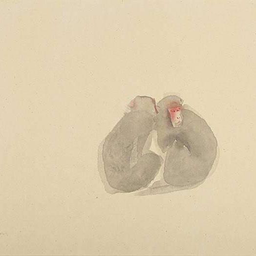 Claire Harkess RSW - Rhesus Macaque
